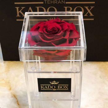 باکس گل استوانه ای شکل رز جاودان ( بونیتا )