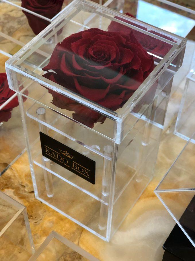 گل جاودان بونیتا در باکس تمام پلکسی استوانه ای سایز بزرگ