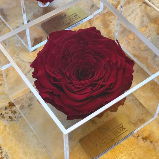 رز جاودان کینگ سایز رنگ قرمز برند رزامور در باکس پلکسی شفاف