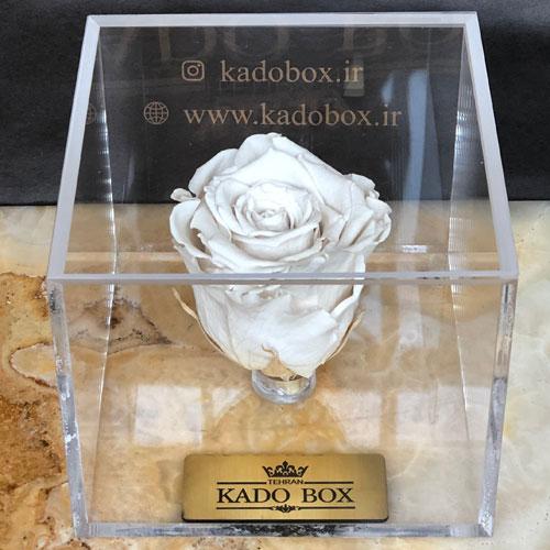 خرید رز جاودان سفید از کادو باکس