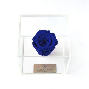 خرید گل رز جاودان آبی برند رزامور Roseamor